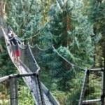 UBC Greenheart Canopy Walkway review